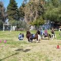 bimbi e pony